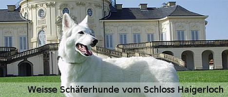 Weisse Schäferhunde vom Schloss Haigerloch